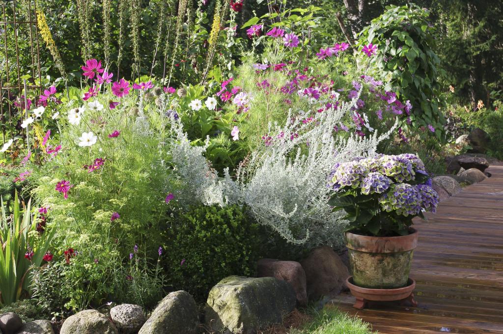Hortensiakrukke på terassen