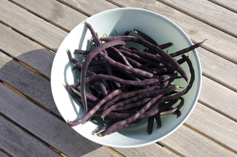 Blauhilde greenbeans