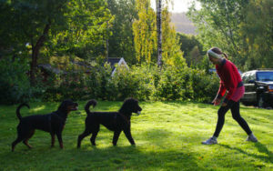 Dogs28_