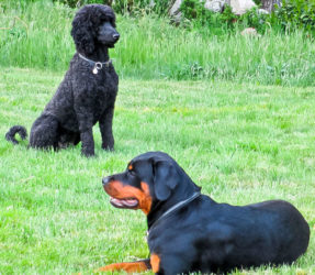 Dogs24_