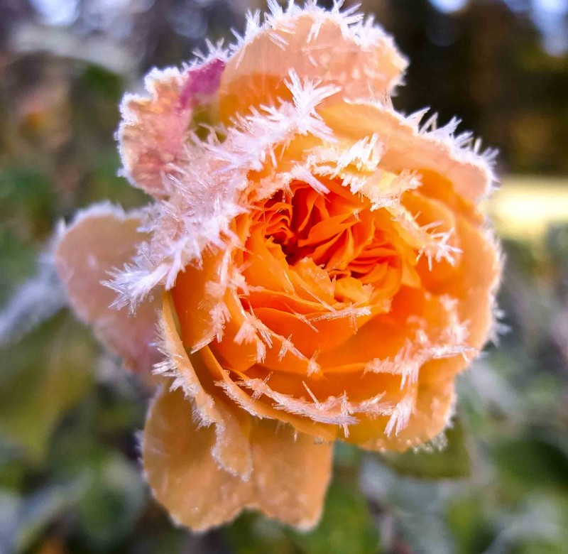 frost_2