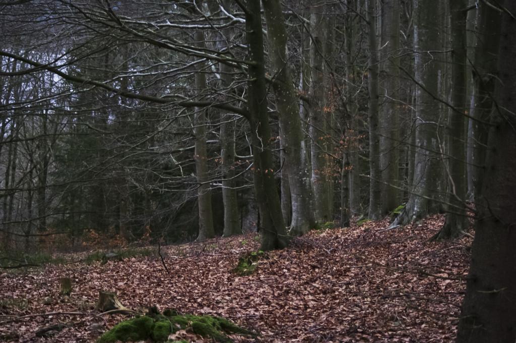På tur innover i Skogen på Gåre