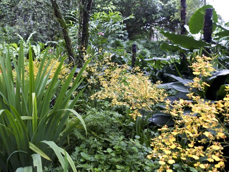 Orkideer i den botaniske hagen