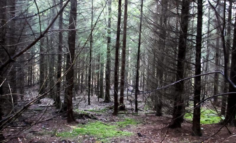 trær vakre25_