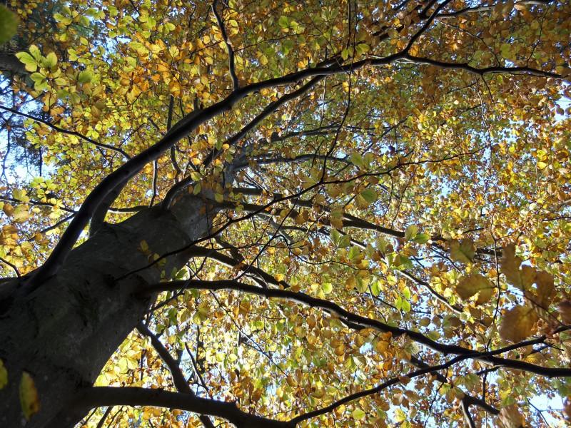 trær vakre24_