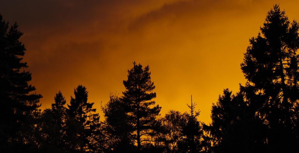Se på formene. På den ujevne kanten som trærne lager mot himmelen.