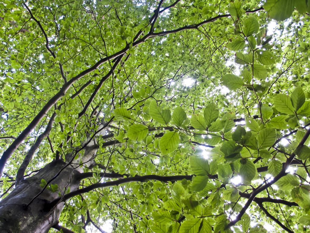 trær vakre22_