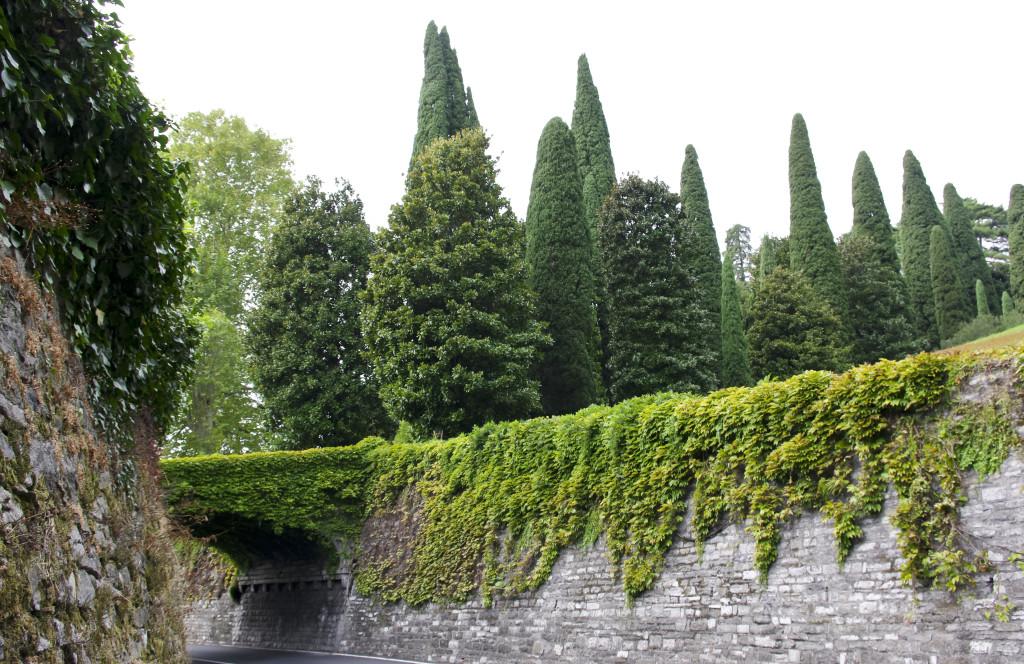 Sypresser og Magnolia fra Nord i Italia. Sterke og tydelige former. Men de fremstår som ryddige og rolige.