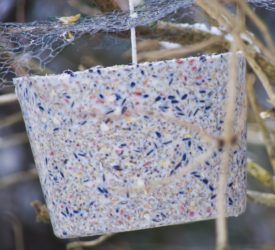 Meisebolle laget i en ti-liters bøtte.