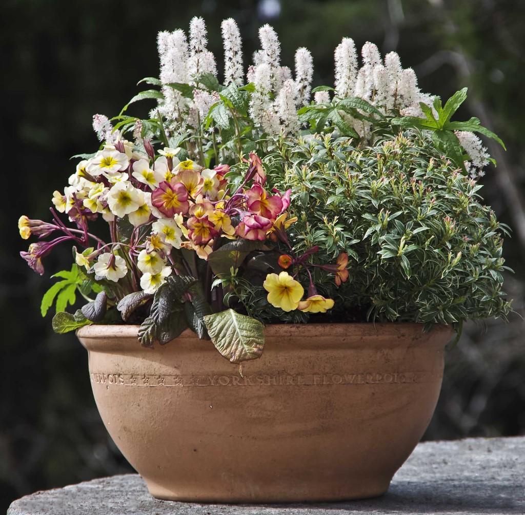 Jeg blander Perlite i jorden. Det gir en luftigere jordsammensetning, og øker jordens evne til å holde på fuktigheten.