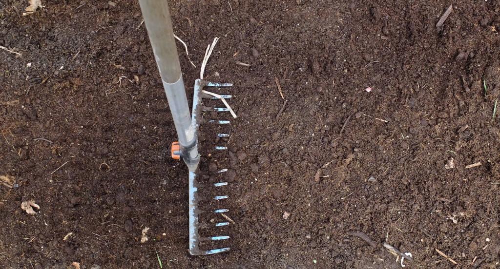 """Jeg raker til jordoverflaten og """"stamper"""" den lett med baksiden ev jernriven for å få jevn jordstruktur rundt potetene. (Muligens unødvendig jål)"""