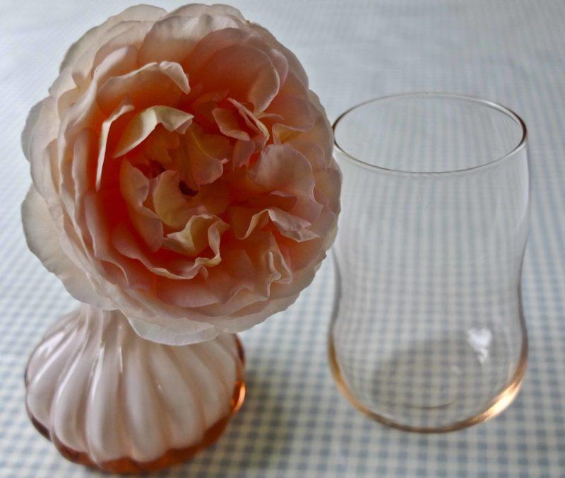 Abraham Darby rose28_