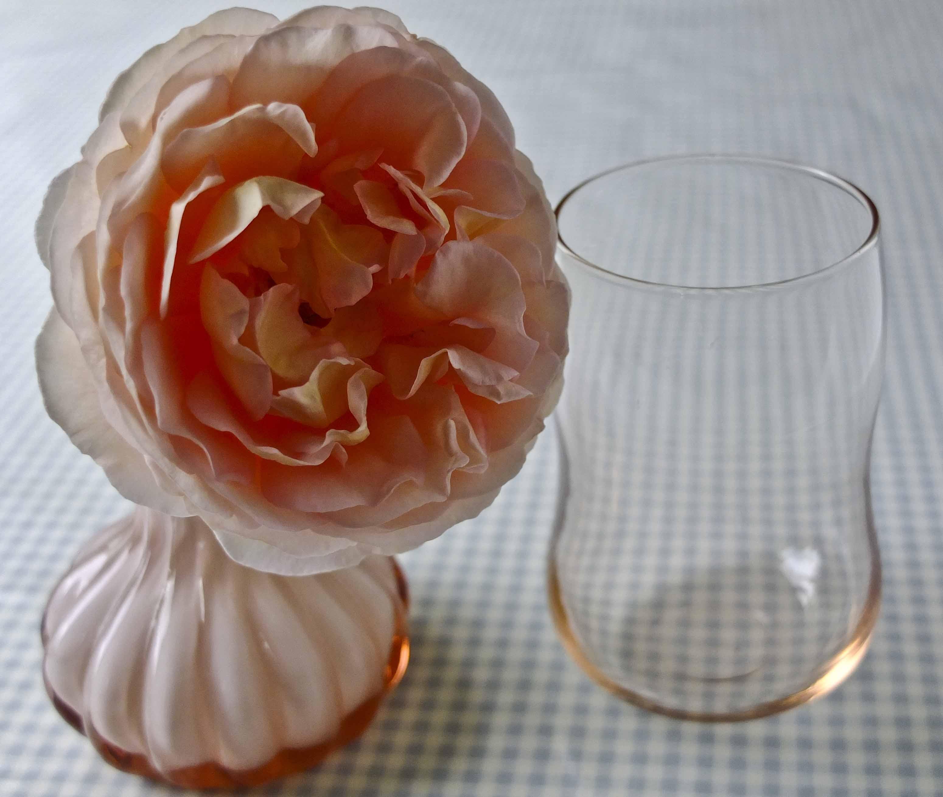 Abraham Darby rose. Fantastiske roser på svake stilker.