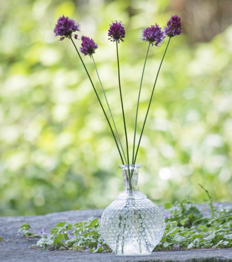 Fem allium i vase.-25_
