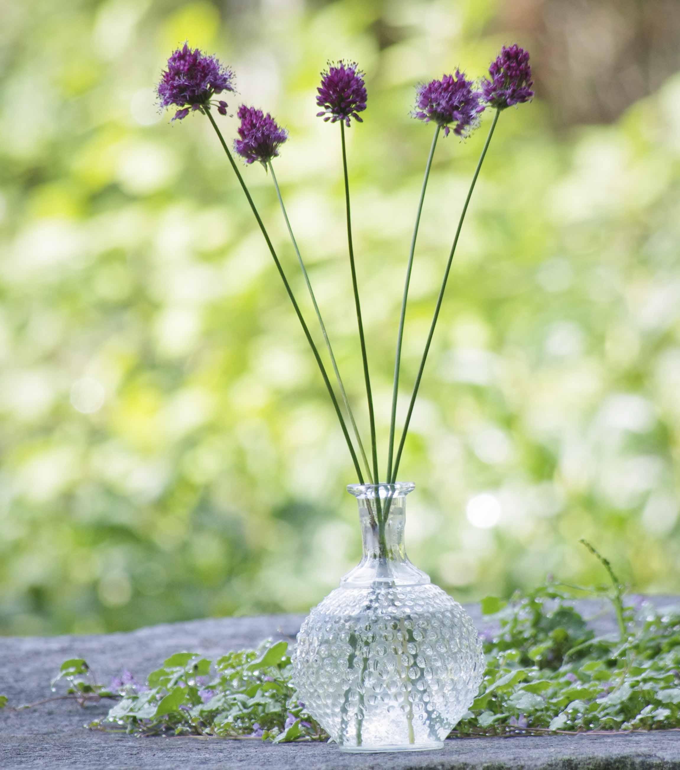 Fem allium i vase. Blomster er det best å bruke i oddetall.
