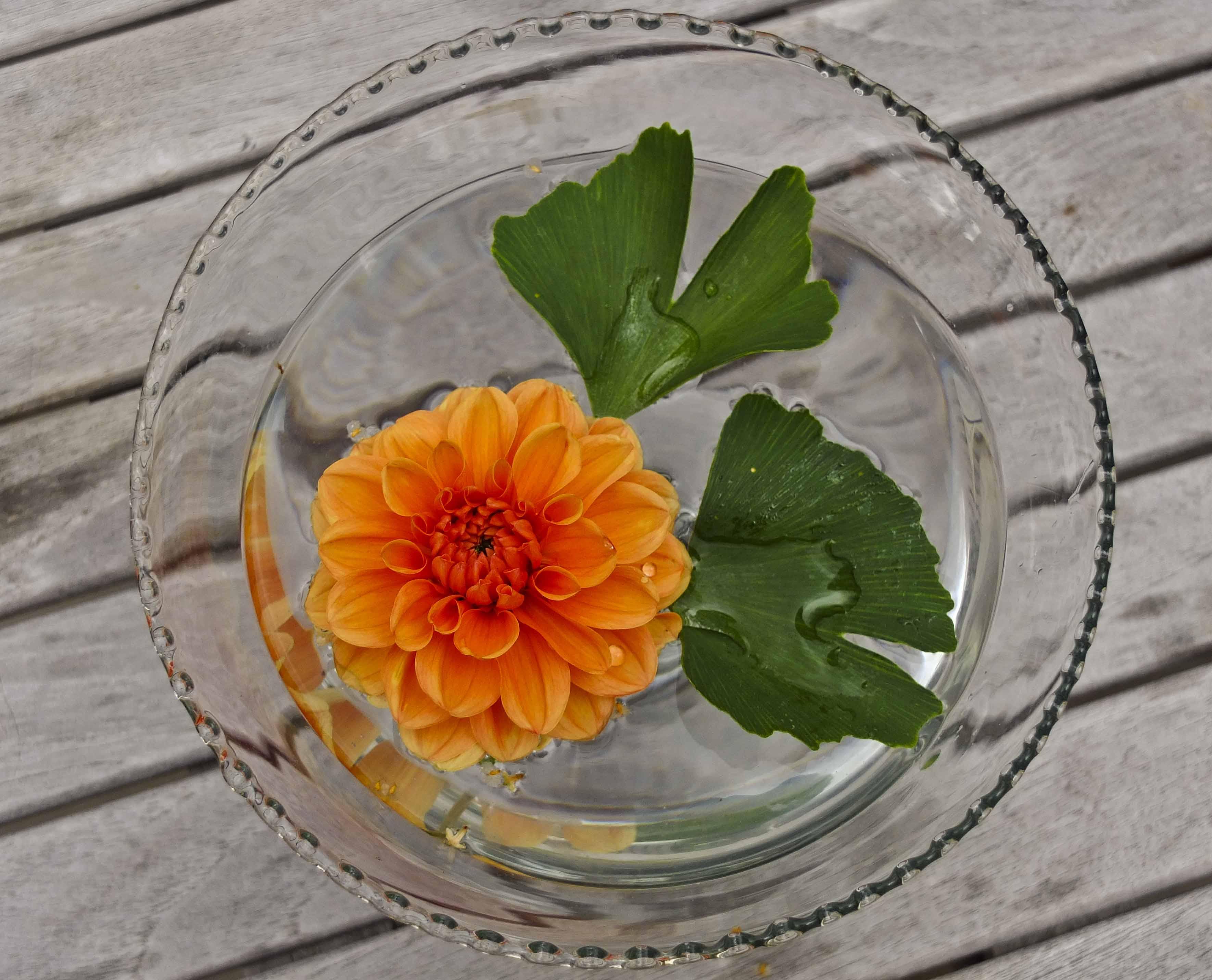 Orange pompon Georgine og to Ginko Bilobablader i glassskålen. Greit å sette ut på terassebordet siden det ikke blir vindfang, men bare vannfang.