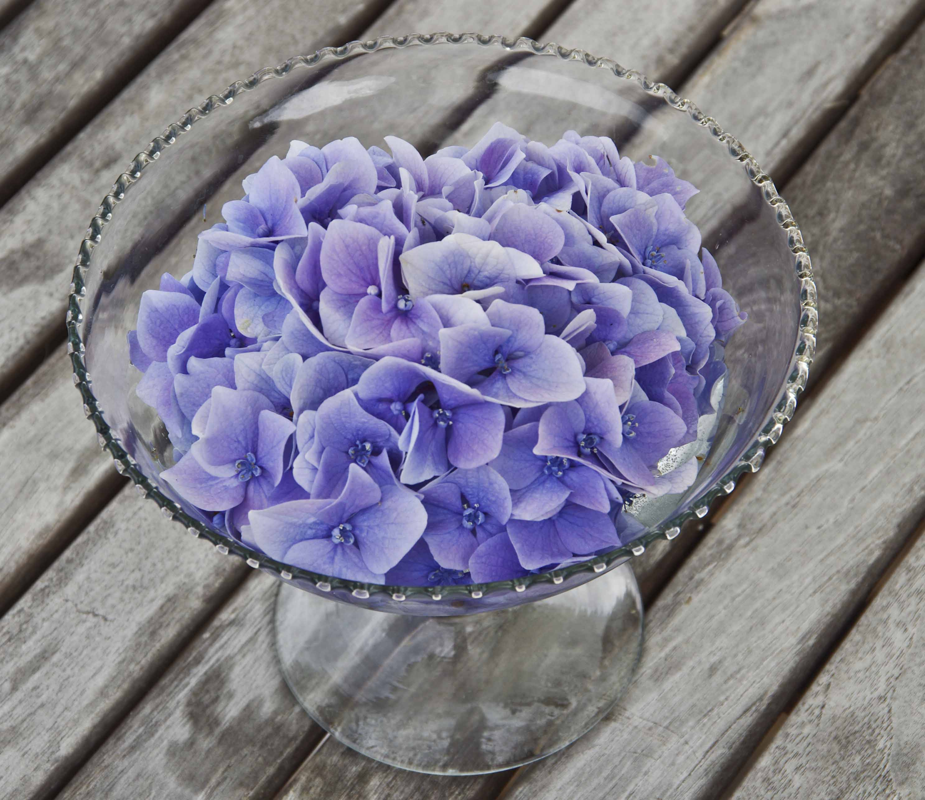 En hortensiablomst brakk av hortensiaen i potten. Vi la den i en skål med vann.