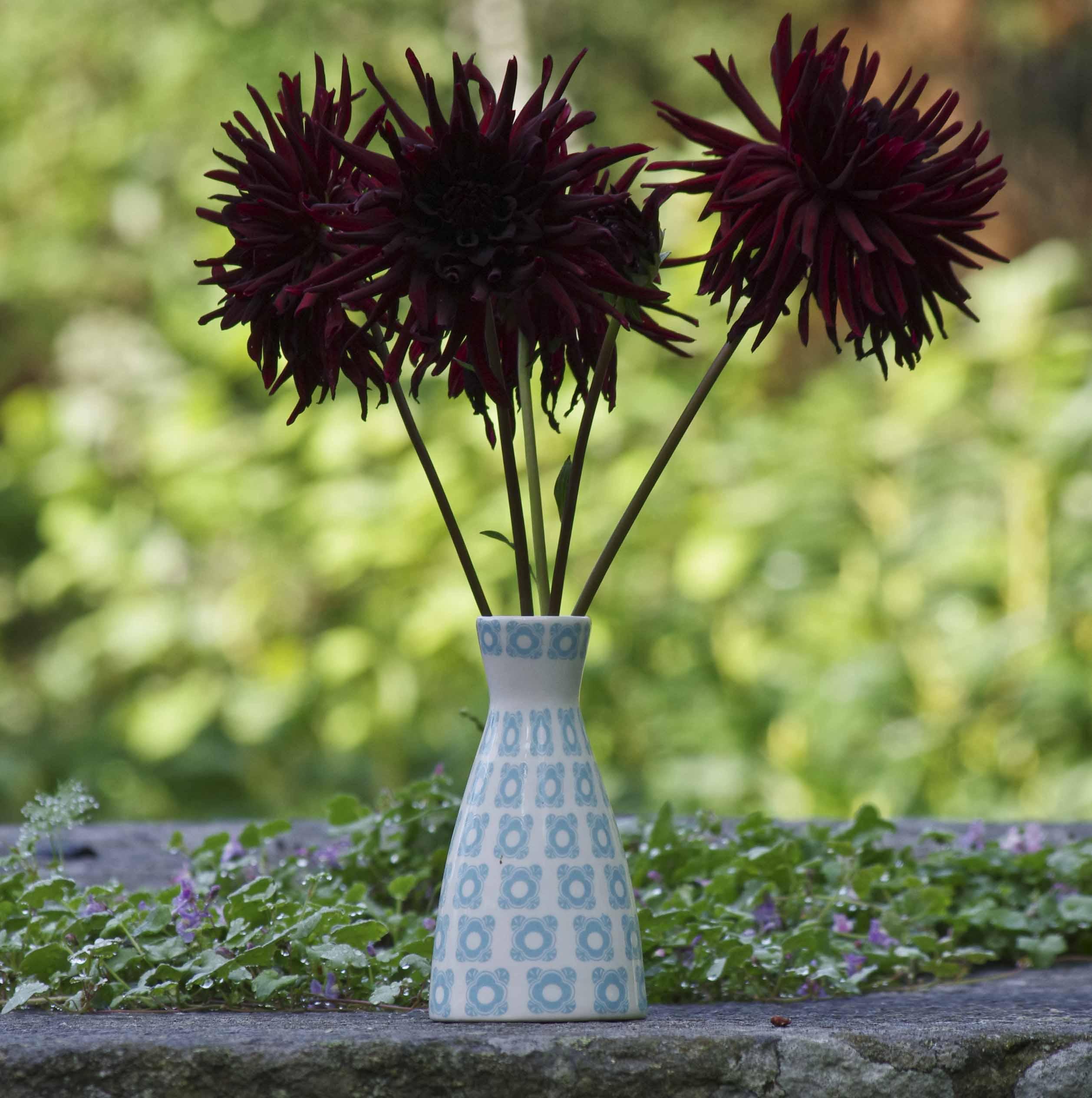 Kaktusgeorginer fra mammaen til Anna. De var superdramatisk satt alene i en liten vase.