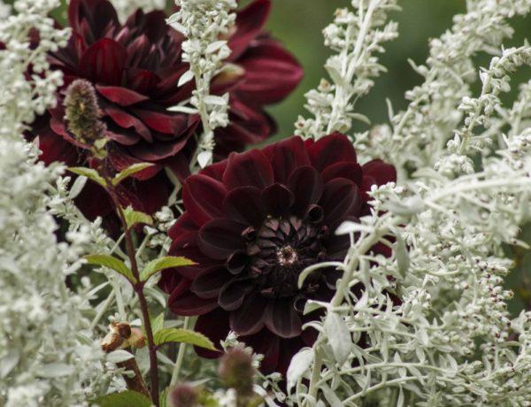 Blomster i vaser24_