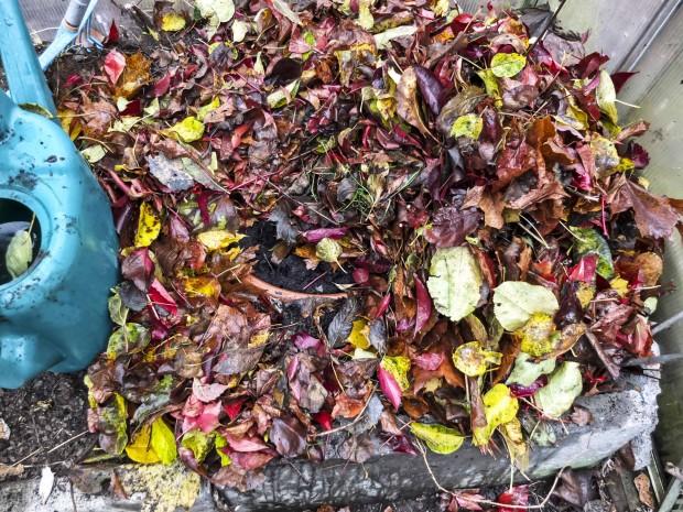Tulipankrukke3_ Krukken er deretter dekket med et tykt lag av vissent løv for å isolere og holde på fuktigheten.