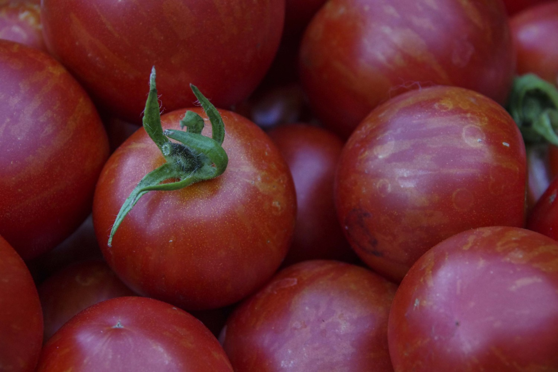 Hvordan så tomater28_