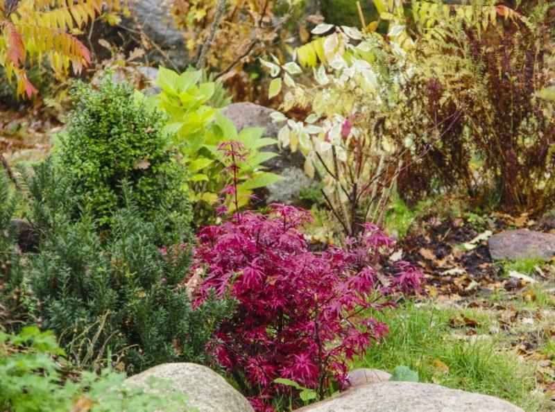 Farger i hagen20_
