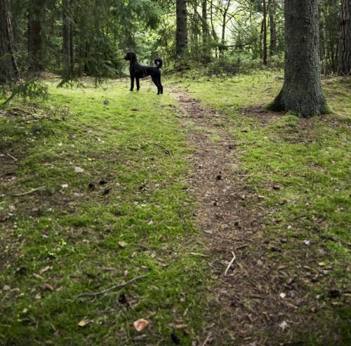 En skogstur anbefales!