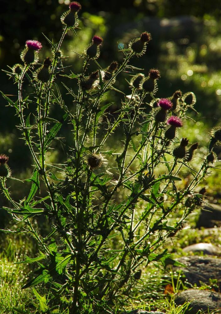 Det er ugress og det er ugress. Fortsatt er det blomster og planter som bare vokser på feil sted.