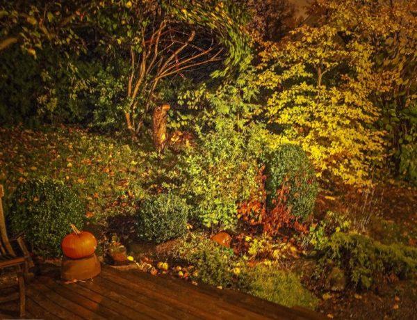 Halloween20_
