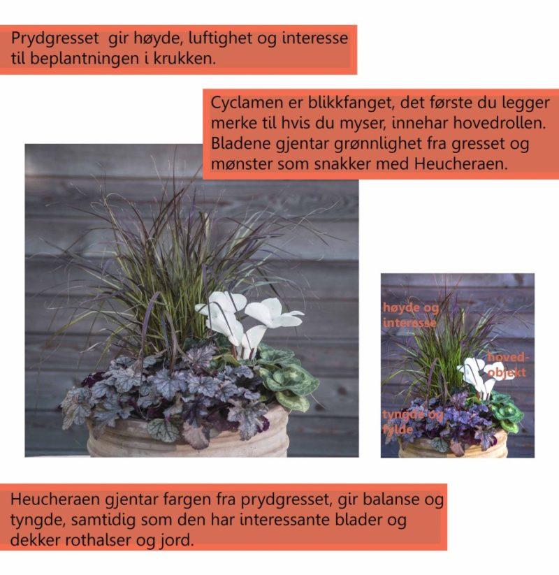 hoestkrukke_med_cyclamen_form21_