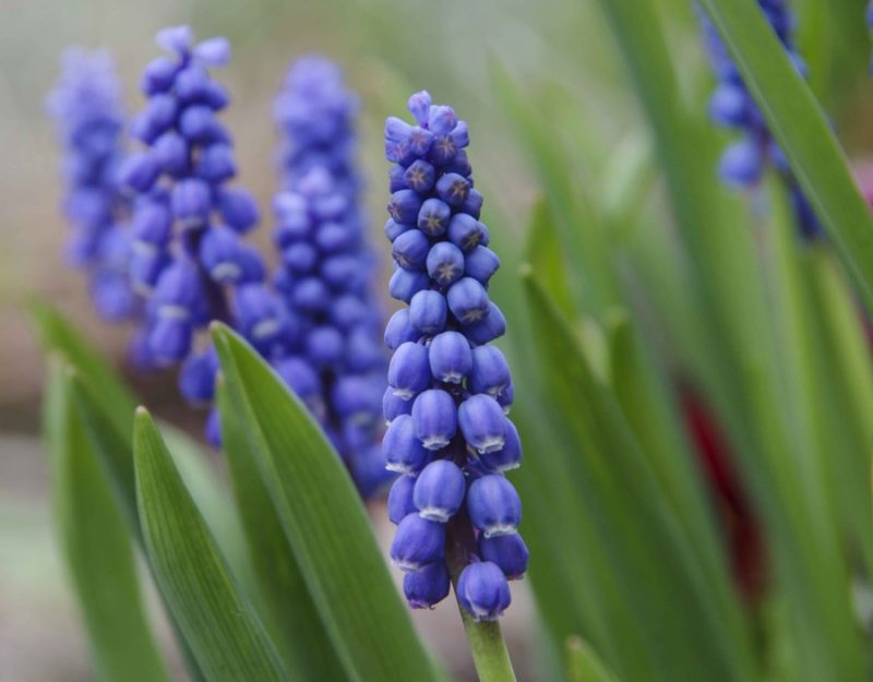 Perleblomster er flotte i en liten rund vase.