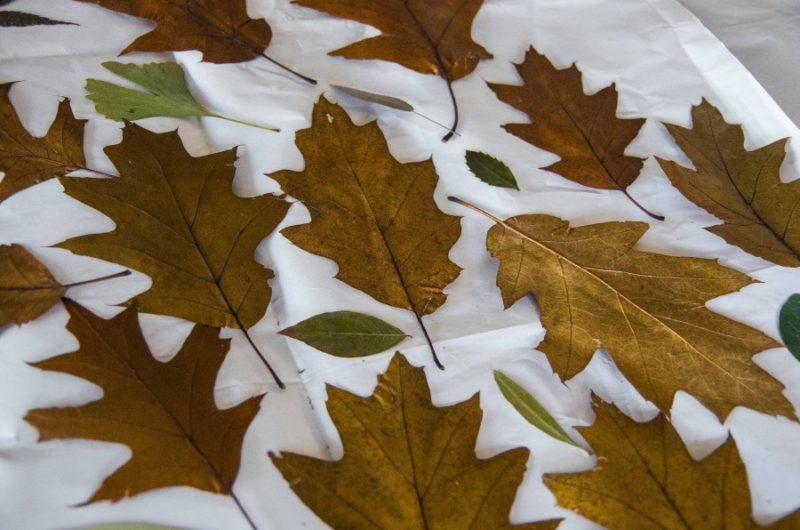 Tørkede og pressede blader.