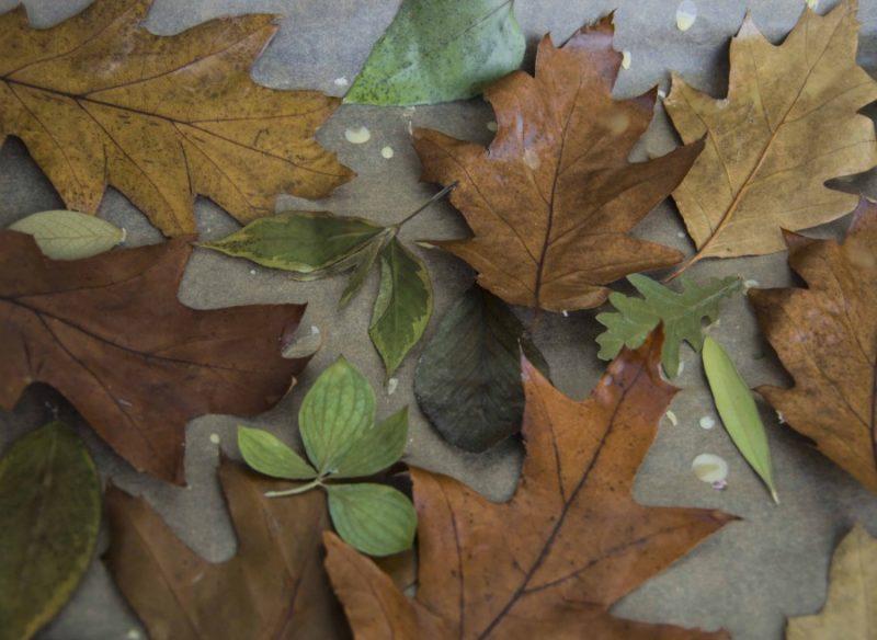 De voksede bladene avkjøles på et bakepapir.