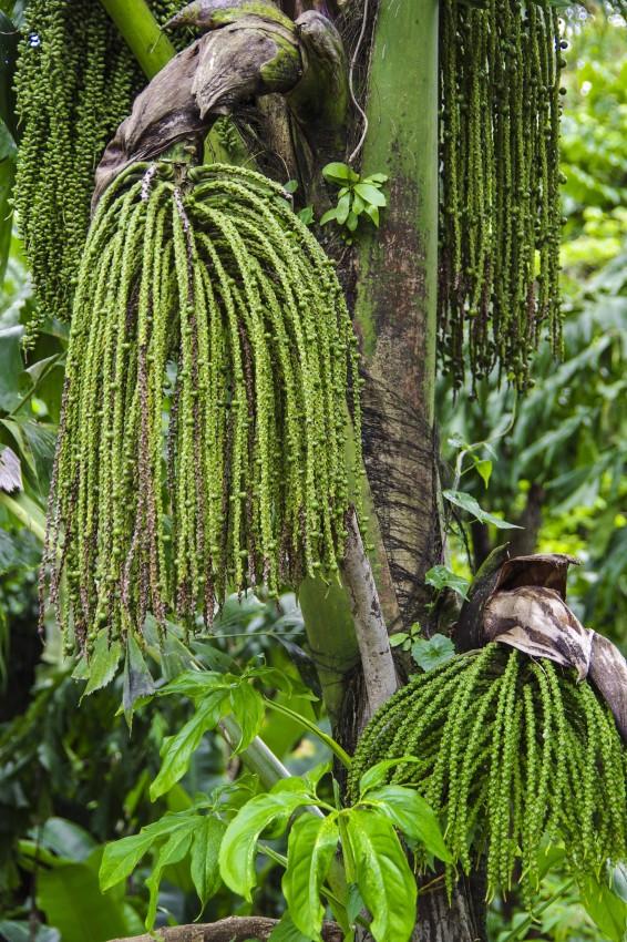Planter med avrundede blader som sukkulenter er lykkebringende.