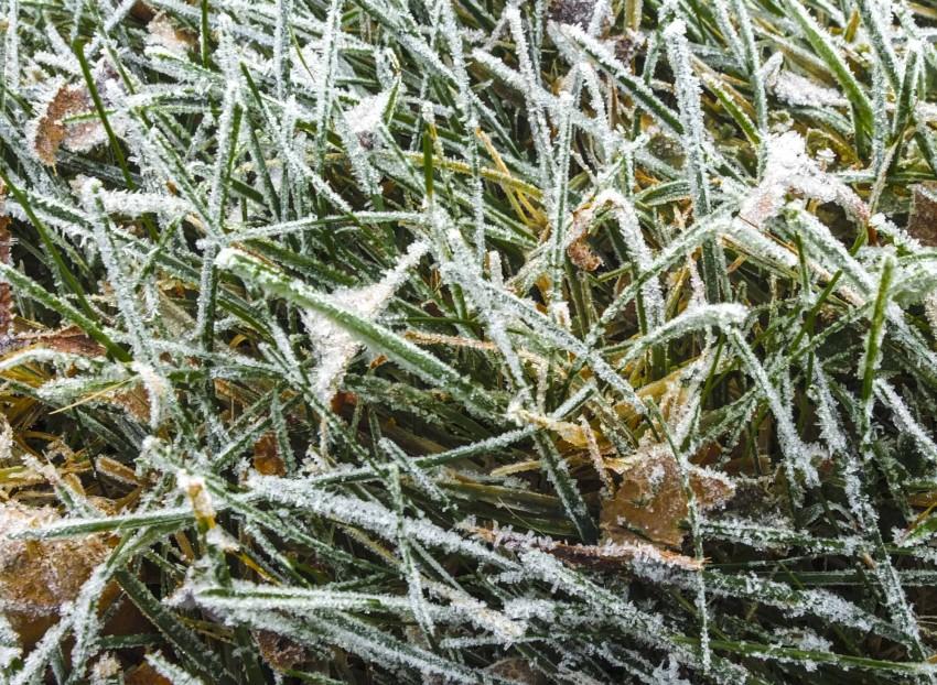 Tråkk ikke på frossent gress! Plenen er nokså sart på vintere,