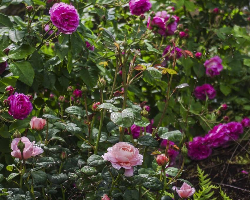 Ikke rart at vi som bor her i nord ønsker oss slike blomster også!