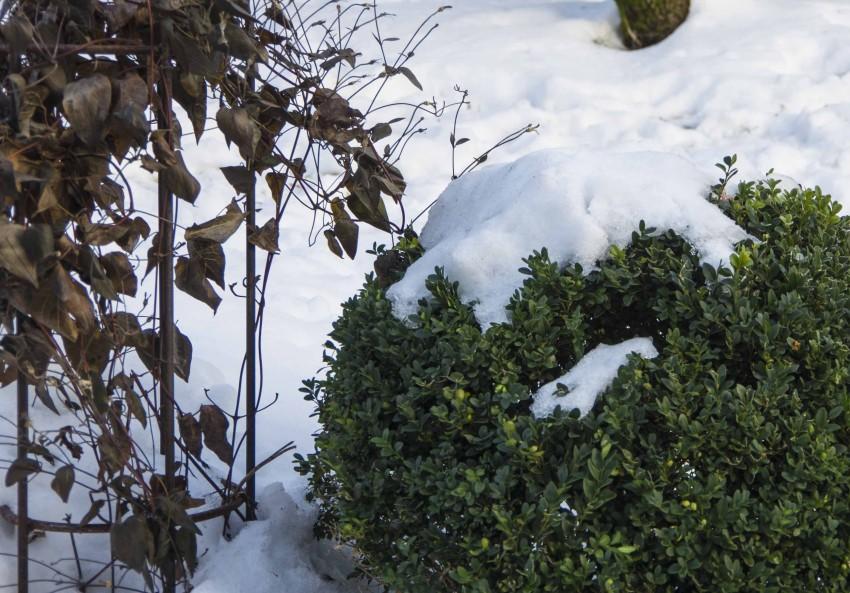 Flaks at det kom snø før den harde frosten!