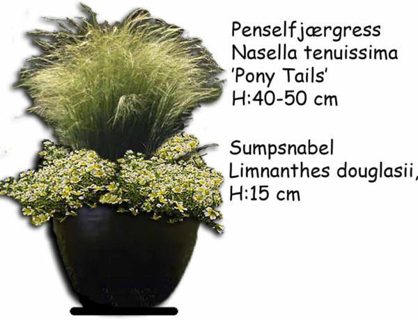 selvsådde krukkeplanter20_