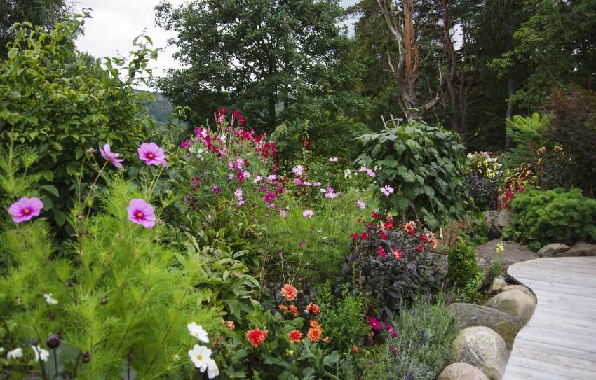 Her kan du se blomsterertene og de grønne bønnene (Blauhilde) sammen med blomsterplanter.
