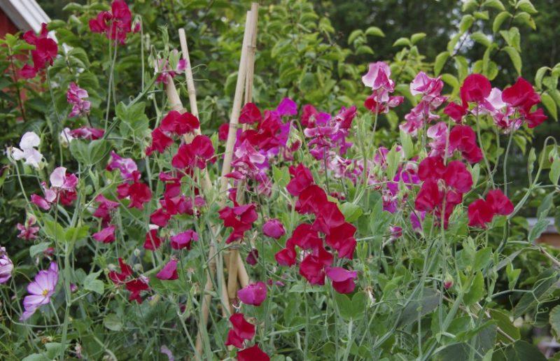 Planter for liten hage21_