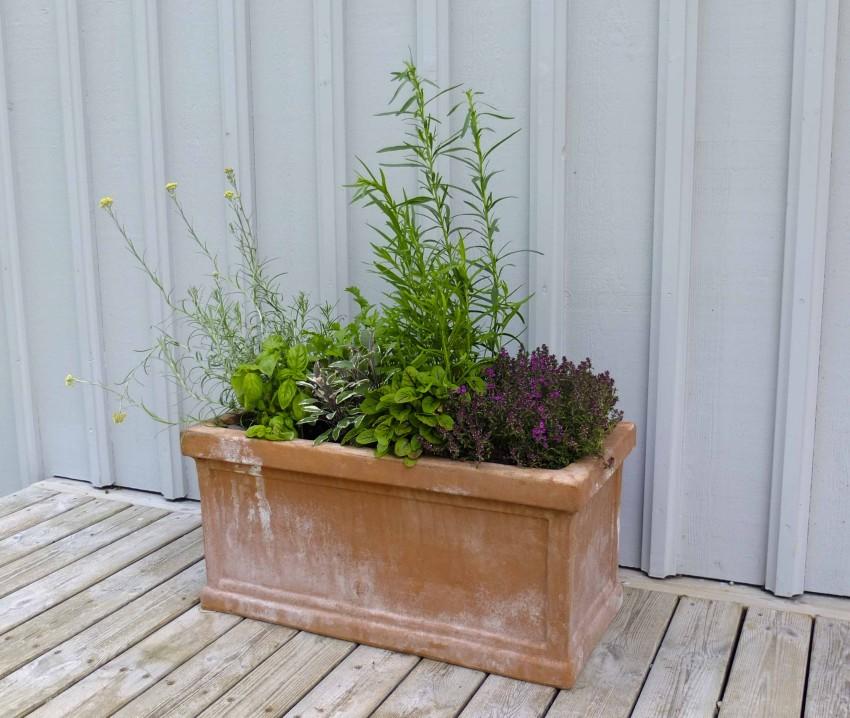 En urtepotte på terrassen kan være et hyggelig samtale-emne, flott tilskudd til middagsmaten og svært miljøskapene.