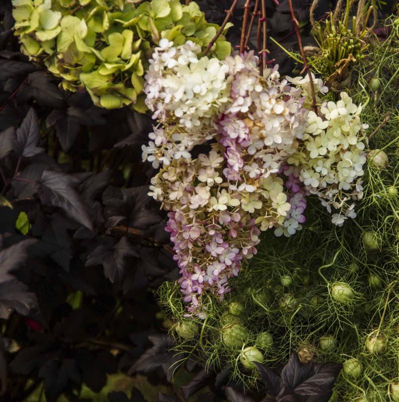 Senhøstes samlet jeg noen buketter med blomster fra hagen som jeg hang til tørk. Her er Syrinhortensia og hagehortensia.