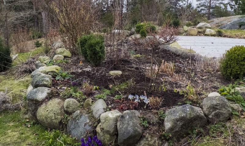 Jeg fjerner visne blader og stilker, klipper ned alt som er dødt. Rotugress lukes vekk, og jeg fyller på litt jord der det er ujevnt og strantete.