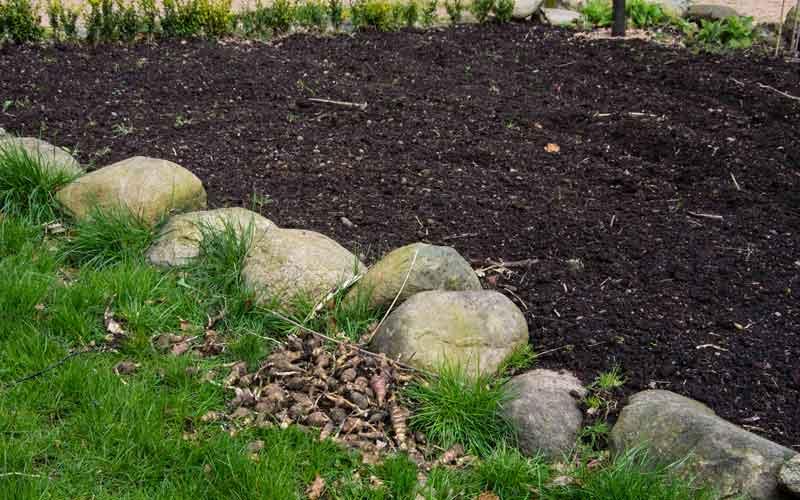 Grønnsakåkeren er spadd opp. Det var mye jordskokkknoller igjen fra i fjor. Potetene er også i jorden nå.