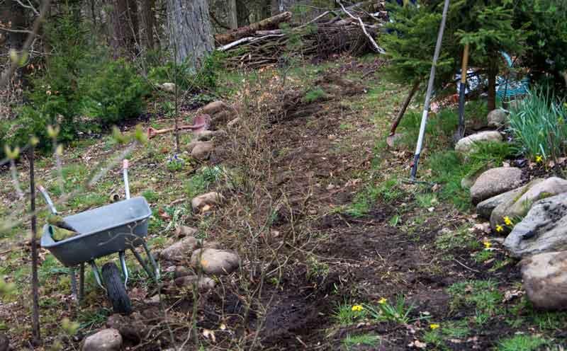 Selvsagt fant jeg ut at jeg skulle plante en hekk, også.