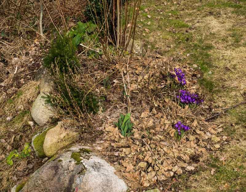 LØv og cisne plantedeler ble fjernet fra bedene.