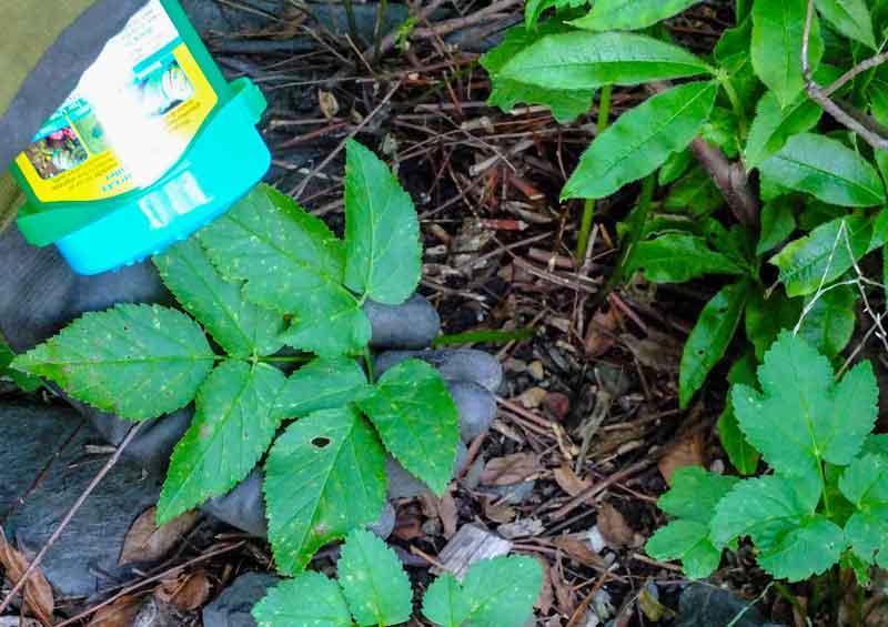 weeds_weekiller_2