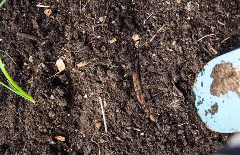 Plant en ny purreløk.