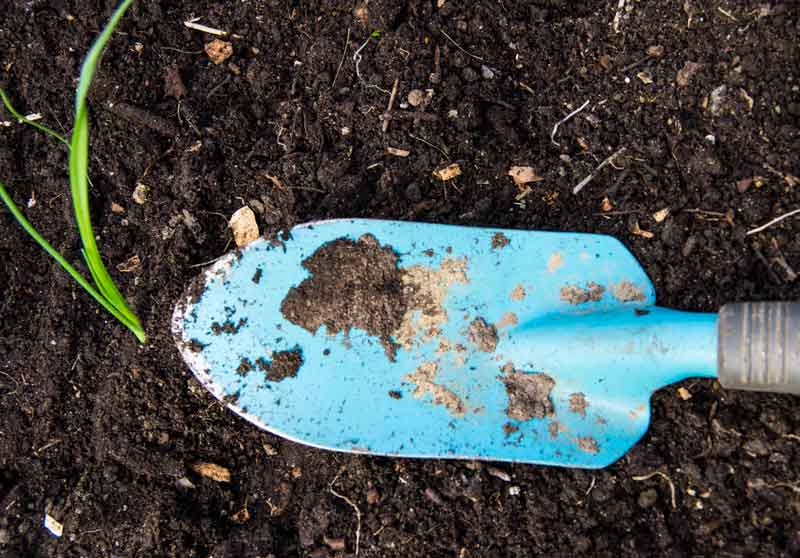 Trykk jorden fast rundt, og bruk feks stikkspadebladet som avstandsmal til neste purreplante.