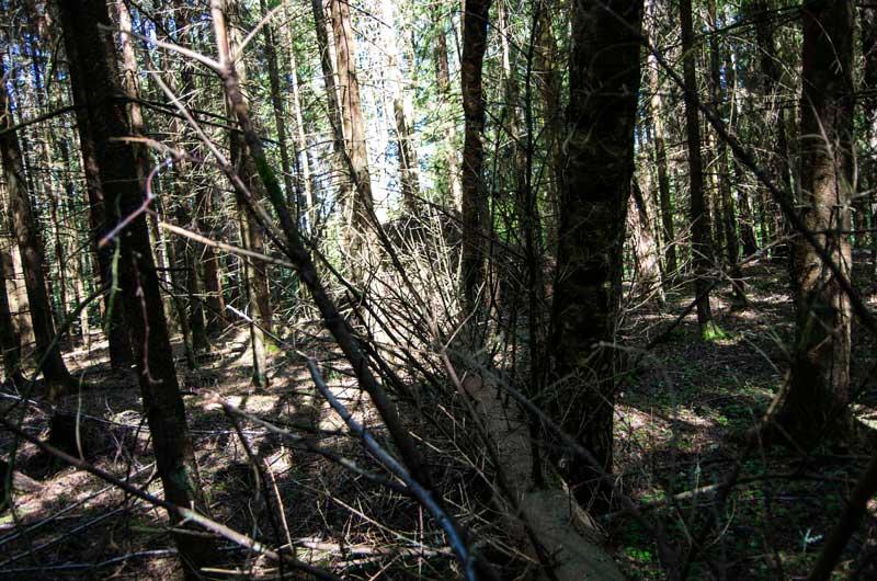 Det er tørt i skogen på Gåre også.